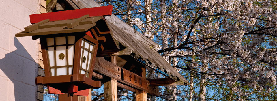 Spring Cherry Blossom and Lantern